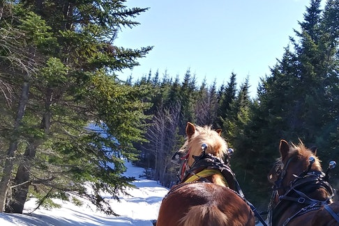 """Nothing like a sleigh ride on a crisp winter day on MacLellans Mountain."" That is what Ron Pettipas wrote when he sent this point-of-view shot of his sleigh ride. It looks like you had a fun time, Ron. Thank you for sharing."