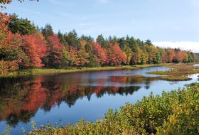 """An observation from Petite Riviere, N.S.:    """"Fall colours seem a bit early coming out this year but still spectacular down here on the South Shore. The photo was taken earlier this week.""""   Doug Gregory then wondered if our dry summer might have had something to do with the early colour?  The answer is yes. A severe drought during the growing season usually makes tree leaves change colour earlier and the colour lasts for a shorter period. Some trees respond to drought stress by skipping the fall colour change altogether; leaves just turn brown and fall off quickly."""