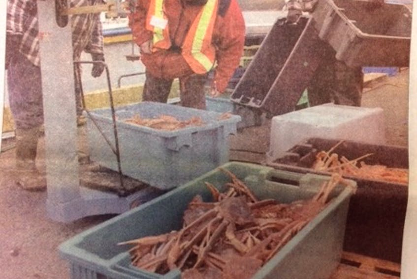 A dockside monitor double checks the crab weight for a couple of fishermen offloading their catch in Arnold's Cove last week. Crab prices fell to $1.50 a pound for the current two-week reporting period. - Packet file photo
