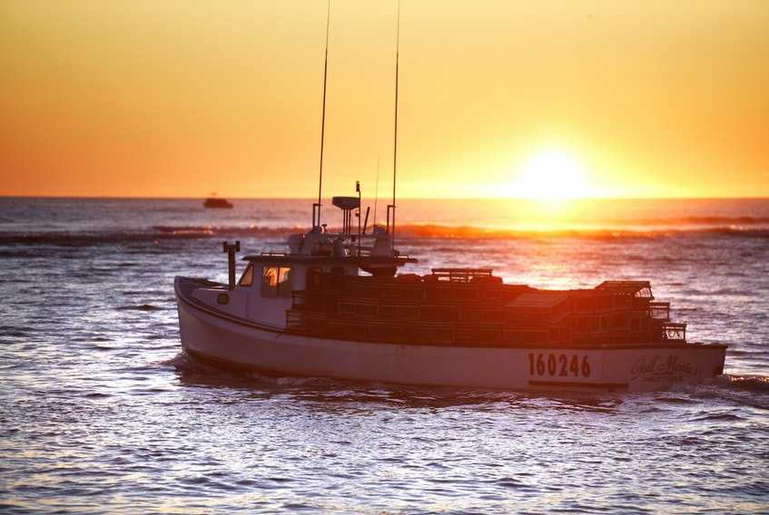 Lobster fishing boats leave North Rustico harbour early Friday morning, opening the spring lobster season on the North Shore. - Nathan Rochford