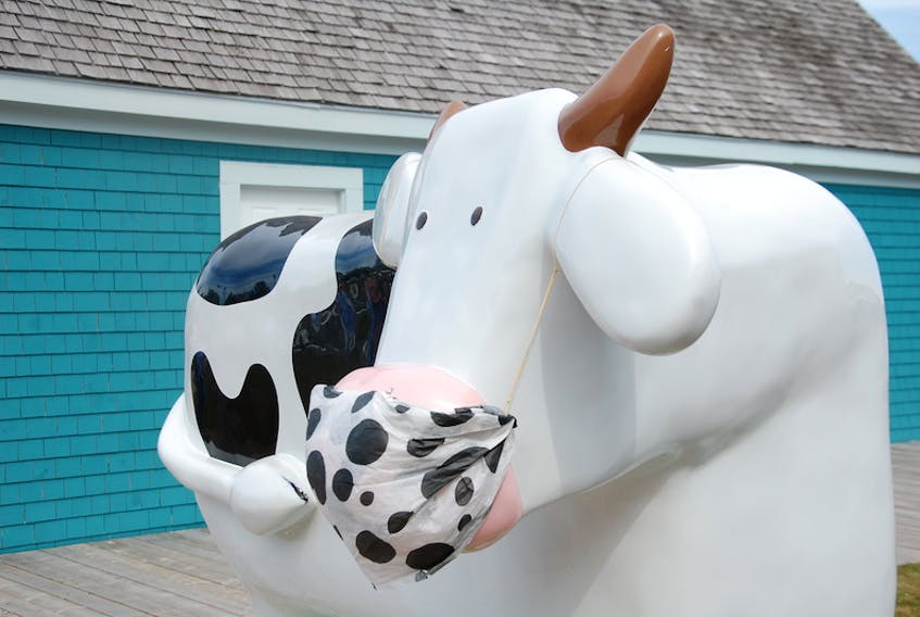 The cow at the Peakes Quay Cows location isn't taking any chances when it comes to the coronavirus.