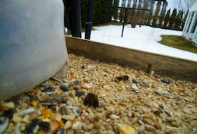 "Fred Vaerewyck lives just outside Montague, P.E.I., and sent this photo of some bees busy at work. He wrote: ""Just wondering is it normal to see honey  bees this time of year? They were friendly as they buzzed around my head.""