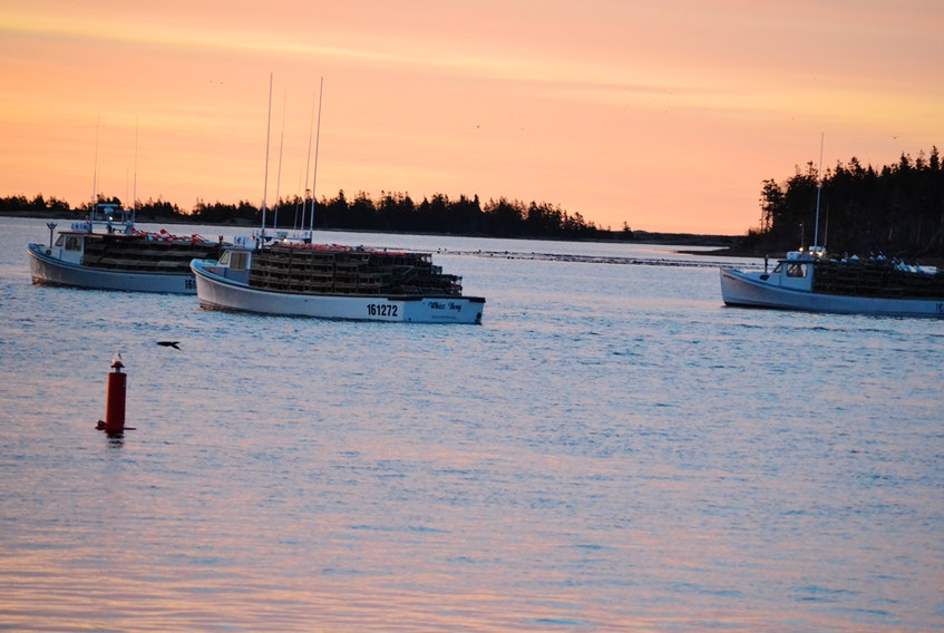 Lobster fishing boats sail out of Alberton Harbour on setting day in May. The Prince Edward Island Fishermen's Association is seeking a ban on all lobster fishing activity in the southern Gulf between the spring and fall commercial fisheries.