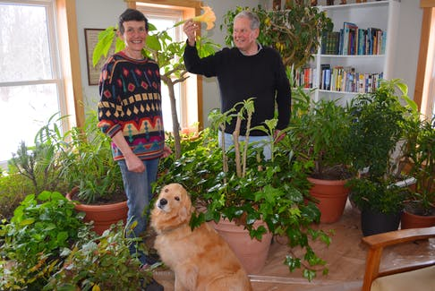 It's springtime almost all year round in Sabina and Kees Kennema's Brae-Derby home. The couple and their pet, Stella, sort through a bounty of plants in their living room.