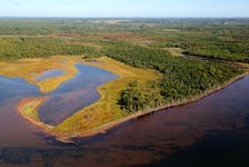 The Nature Conservancy of Canada used World Environment Day to announce a new conservation initiative of the Percival River in Egmont Bay.