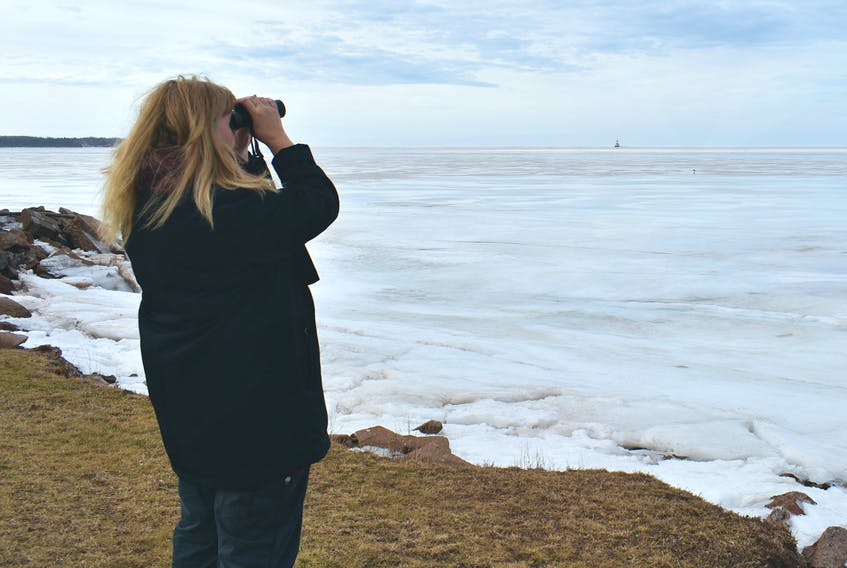 """Donna Martin watches a lone gull search for fish under the frozen Summerside harbour. """"They're not beasts that try to steal your food. If you watch them you will see just how beautiful they really are,"""" she said, with a smile."""