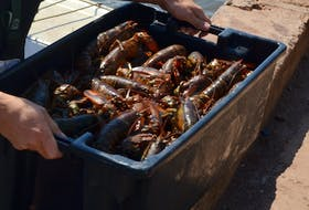 Spring lobster fishery hits the half-way point. Journal Pioneer file photo