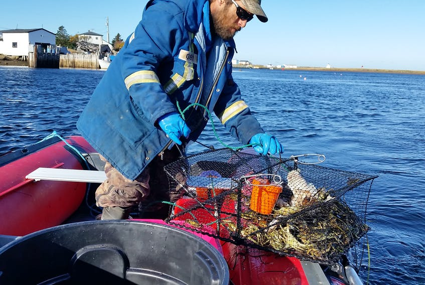 Preston Grandy pulls in pots containing green crab during a recent fishing trip in Fortune Bay.