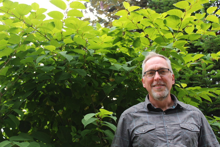 Todd Boland, horticulturalist at Memorial University's Botanical Gardens, is towered over by aggressive Japanese knotweed, which has overtaken some garden beds at the garden's nursery.