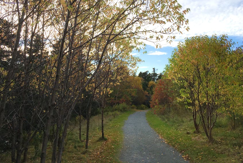 The Virginia River trail in St. John's. — Submitted photo