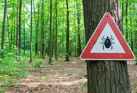 If you are bitten by a tick that is infected with Lyme disease, a single dose of antibiotics can prevent an infection from developing, if administered within 72 hours of tick removal.