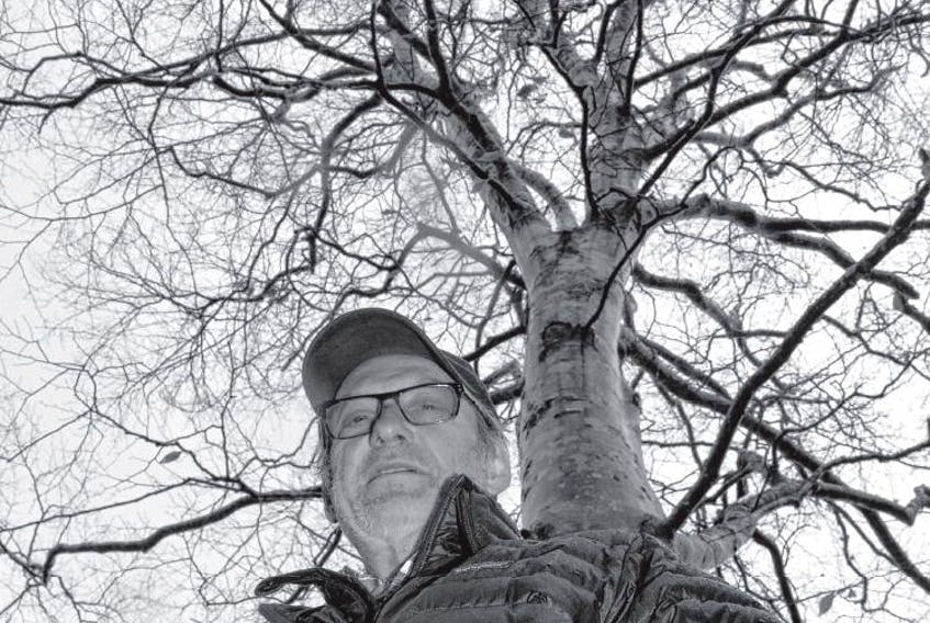 Henri Steeghs has been searching out American beech trees that are resistant to the infection that has decimated their population and propagating them in the hopes of assisting in the species' revival.