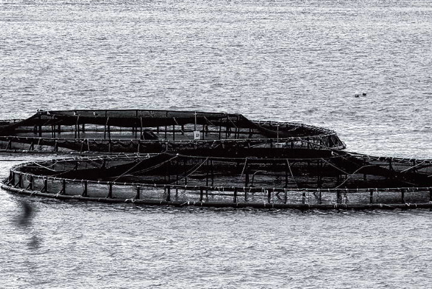 """Julie Gelfand, Canada's commissioner of the environment and sustainable development, said that the Department of Fisheries and Oceans """"is at risk of being seen to be promoting aquaculture over the protection of wild fish."""""""