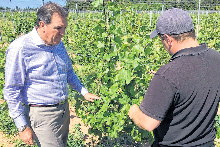 Fox Harb'r president Kevin Toth, left, and vineyard manager Aaron Little inspect Riesling vines at the resort.