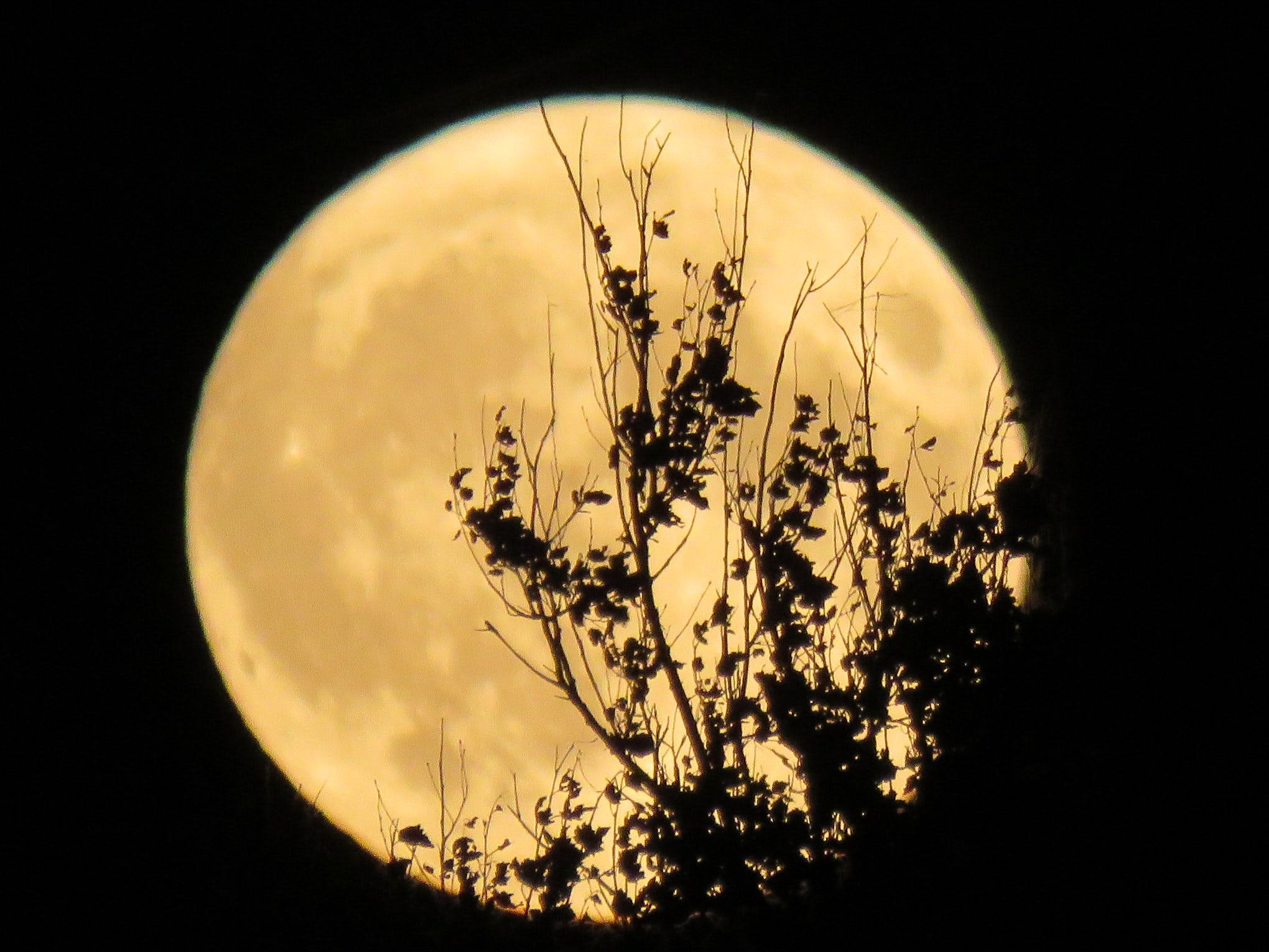 At 1:33 ADT (2:03 NDT) Saturday a.m., the September moon became the Full Harvest Moon. Corinne Reid took this stunning photo just hours before that, as Earth's only natural satellite came up over Dominion Cape Breton N.S. The Harvest Moon is the full moon closest to the fall equinox;  some years, the full moon in October gets the honours of being called the Harvest Moon.