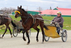 Sonny Rankin will be inducted into the Cape Breton Sport Heritage Hall of Fame next month. He's shown exercising one of his horses at Northside Downs in North Sydney last week.