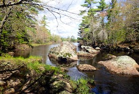 The Blue Mountain Wilderness Connector will preserve a valuable forest and wetlands link between habitats for wildlife in the southwestern area of mainland Halifax. - Nova Scotia Nature Trust