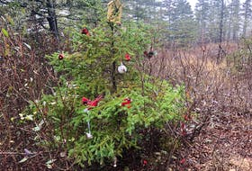 Jan. 4, 2021 - On a recent walk though the woods of Lunenburg County, John DeMont discovered trees covered by mystery decorations.