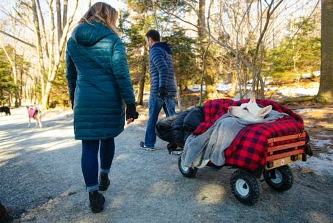Sarah MacKeigan and Rodney Habib take Sammie for a walk through Shubie Park on Friday, February 21, 2020. Sammie has ALS but still enjoys walks through the park.
