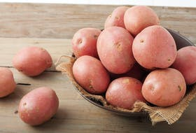 Red potatoes are the start of two of today's featured recipes.