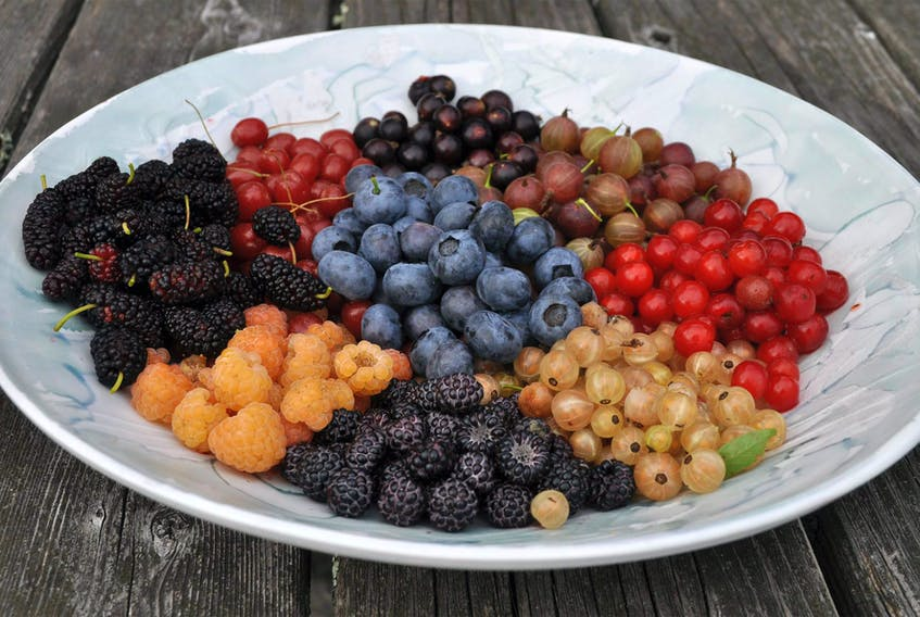 Newfoundlanders love their berries. Some, including columnist Cynthia Stone, say the best is harvested last — partridgeberries.