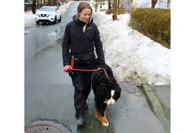 You may have driven past Jill Blackmore somewhere in greater St. John's. The founder of Tails and Trails NL, a dog walking service, is shown here with Sophie, a Burnese mountain dog.