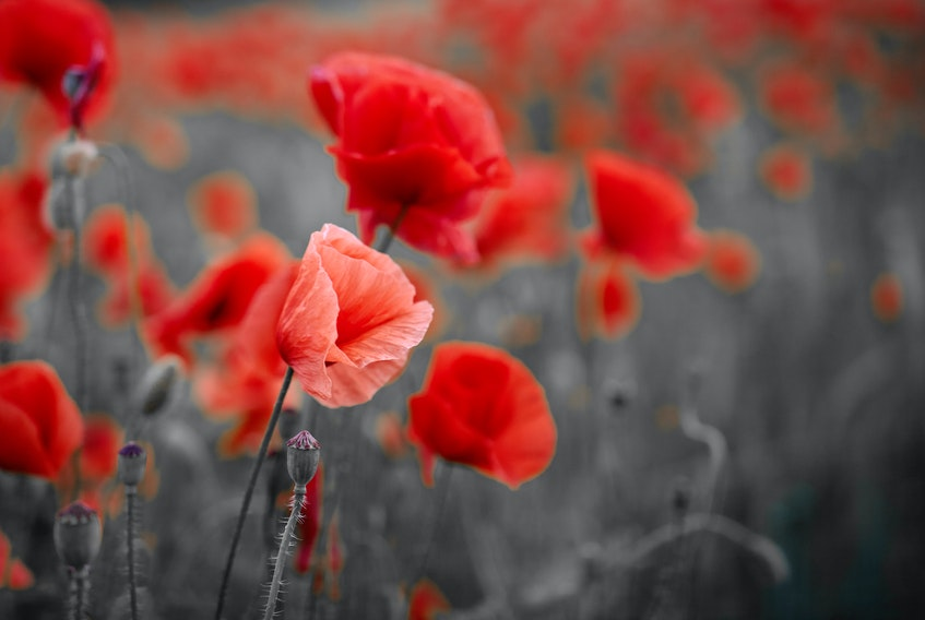 On Remembrance Day, many people observed two minutes' silence. —