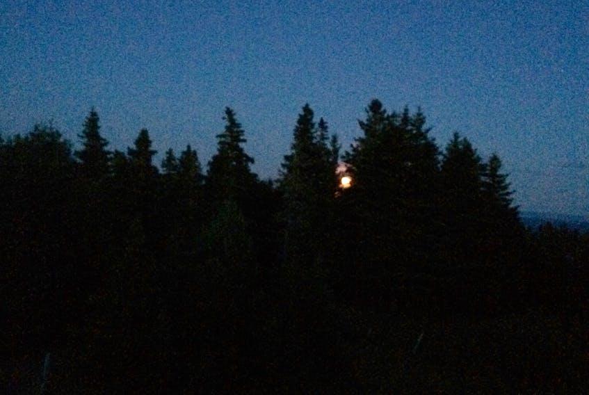 August moonrise and spruce treeline. —