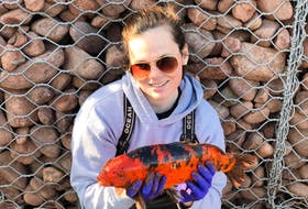 Volunteer Katie Rayner, in this photo shared by P.E.I. Fish and Wildlife on its Facebook page, displays a large koi fish that members of the Tignish and Area Watershed Management Group captured in Harper Road Brook near Tignish recently. Fish and Wildlife is cautioning owners of such exotic fish from releasing them into Island waterways as they can negatively impact native species. (From P.E.I. Fish and Wildlife Facebook page)