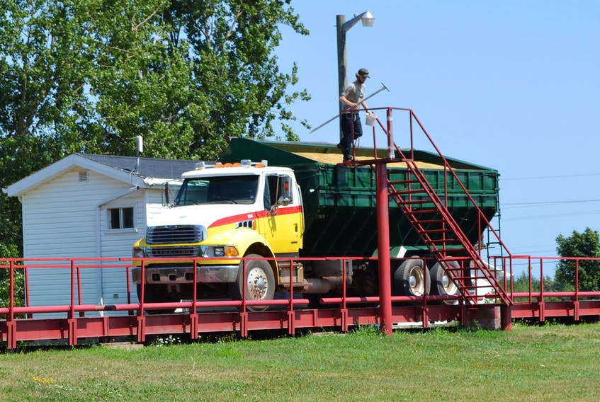 A P.E.I. Grain Elevators worker checks the moisture level on a load of grain on the scales at the Elmsdale elevator.