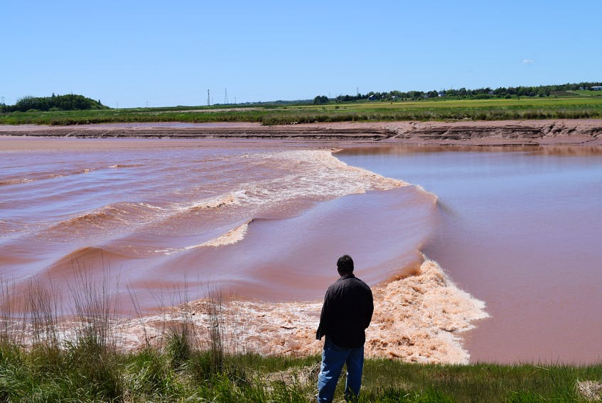 A tourist watches the tidal bore flow up the Salmon River near Truro on Friday.