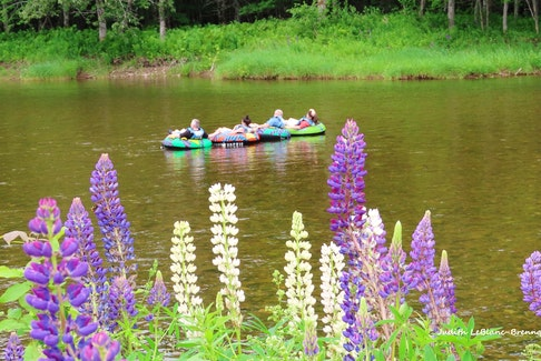 "Summer is here and the ""livin"" is easy!   Judy LeBlanc-Brennan came across this happy group of people floating down the Margaree River in Cape Breton.  Lupins always add a splash of colour in July and the brightly coloured inner tubes complimented this perfect summer scene."