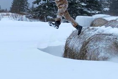 I don't see this enough – kids playing outside. In the winter, it can be difficult to find things to do - until you get 30 cm of snow.  Amy Lynn Langlois' timing was perfect.  She caught Lexus Mazie in mid-air in Port Lorne, N.S., Monday morning.  Yes, that's a bale of straw!  Snow and the farm, now that would make me jump for joy too!