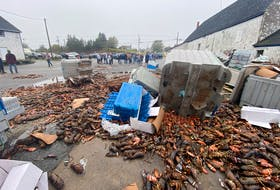 Dead lobster lays outside a lobster pound in West Pubnico, Yarmouth County Wednesday morning. Commercial fishermen said the dead lobster, which also included rotted lobster, was inside the facility. There were also some undersized and egg-bearing lobsters.