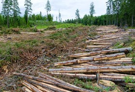 Unregulated clearcutting is harming our environment, says columnist Jim Guy. — STOCK IMAGES