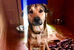 A young dog that was rescued from drowning in Digby's Haines Lake has lots of people willing to adopt her. Contributed