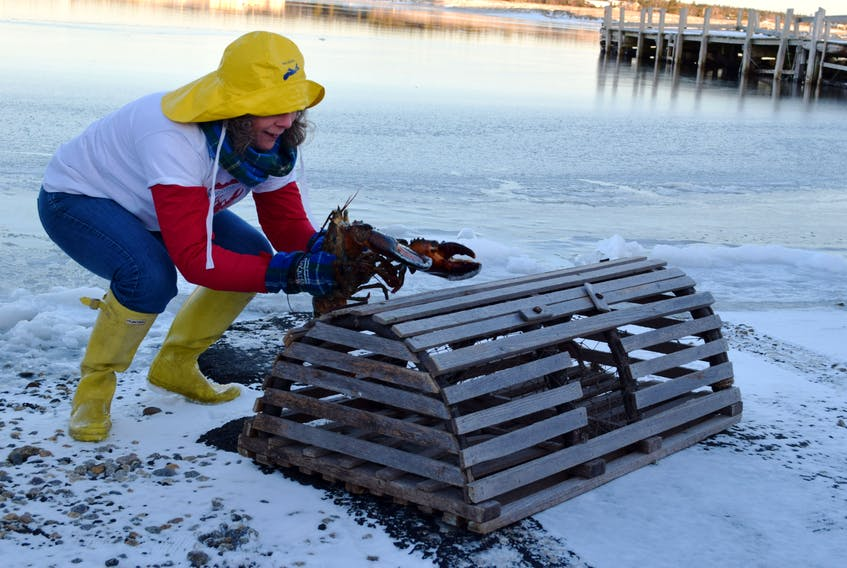 """Donna Hatt gives Lucy the Lobster a helping hand in """"crawling"""" to the top of the trap. Lucy saw her shadow on Groundhog Day, so six more weeks of winter it is – and not an early spring– according to Lucy. KATHY JOHNSON"""