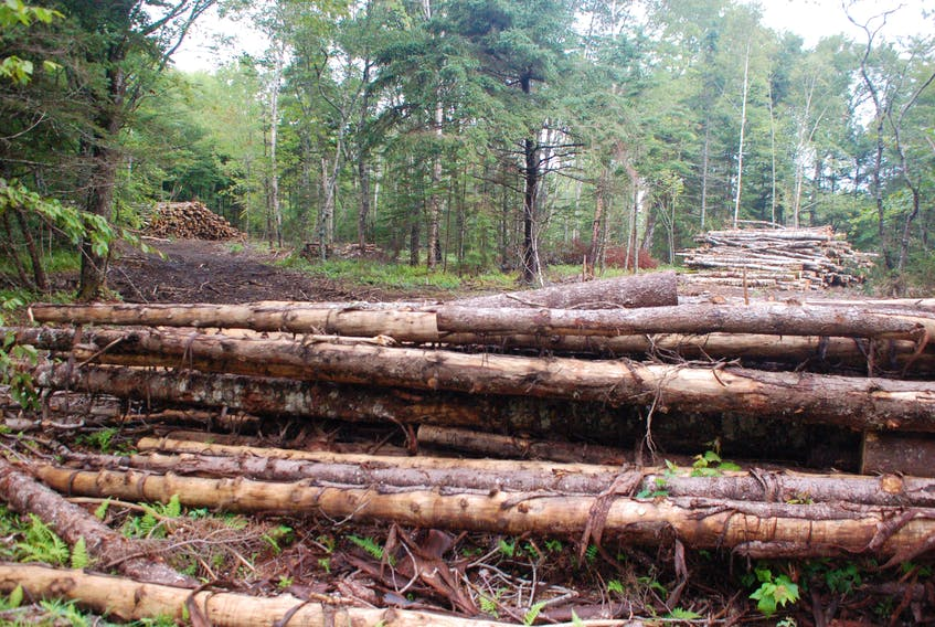 Soil nutrients, including calcium, nitrogen, phosphorus and potassium, will wash out of the soil when the forest is removed.