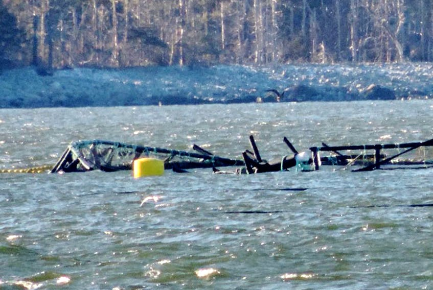 A photo taken on Jan. 10 shows the damage to one the finfish pens in Jordan Bay that was damaged in the Jan. 4 weather bomb.