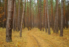 Consultation closes Friday on how the Department of Lands and Forestry wants to implement the recommendations of the much touted Lahey Report into forestry practices.