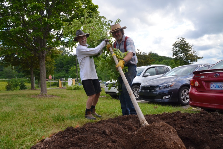 Don Cranford and Bruce Partridge raise a disease resistant American Elm outside St. Martha's Regional Hospital on Friday. (AARON BESWICK PHOTO)