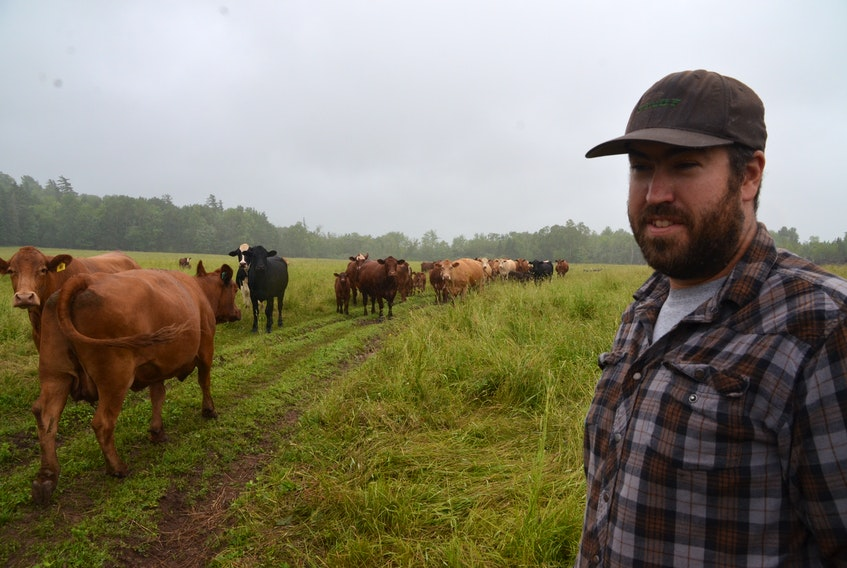 Derek Gladney, owner of West River Farms, with his herd in Sylvester,Pictou County. (AARON BESWICK PHOTO)