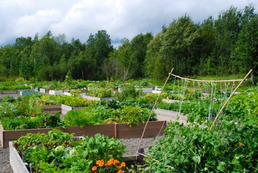 Community Garden in Grand Falls-Windsor