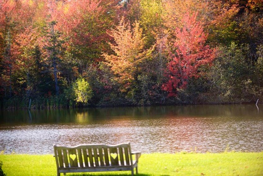 The leaves have turned colour for the autumn, but are past their prime in most areas of P.E.I. This display was at Ben's Lake in Kings County.