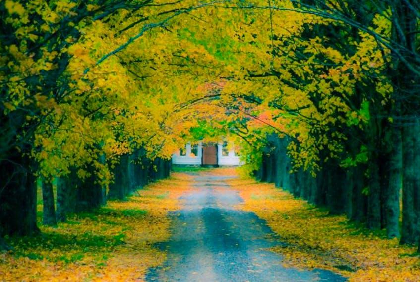 A late fall day in Coldbrook