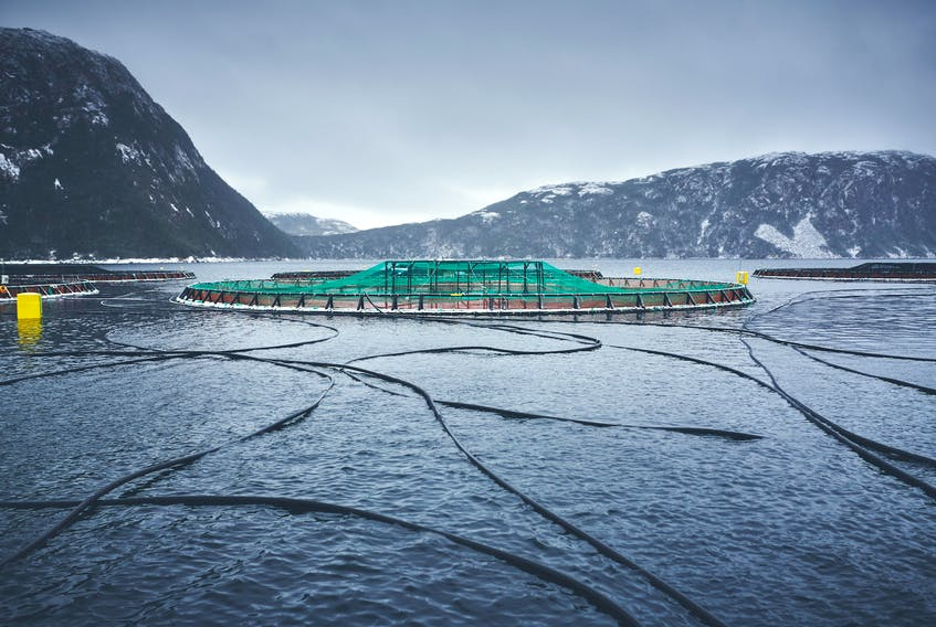 The Atlantic Salmon Federation has concerns about open-pen salmon farms, alleging the close confinement of fish causes diseases and parasitic infections and potential impacts to wild salmon populations. The group says a new Aquaculture Act for Canada should protect wild salmon. Photo courtesy Atlantic Salmon Federation