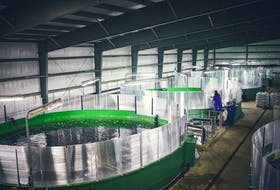 The business of aquaculture is important to rural economies in Canada, providing employment in facilities like this land-based salmon hatchery at St. Alban's, on the south coast of Newfoundland. In addition to salmon and other finfish, shellfish aquaculture produces mussel, oysters and scallops and provides jobs in Atlantic Canada. The industry is currently regulated by the Fisheries Act but DFO has started the process towards creation of a stand-alone Aquaculture Act.