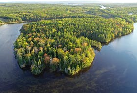 The Nature Conservancy of Canada will add this land to the Cain's Mountain Wilderness Area in Victoria County. Contributed/Mike Dembeck