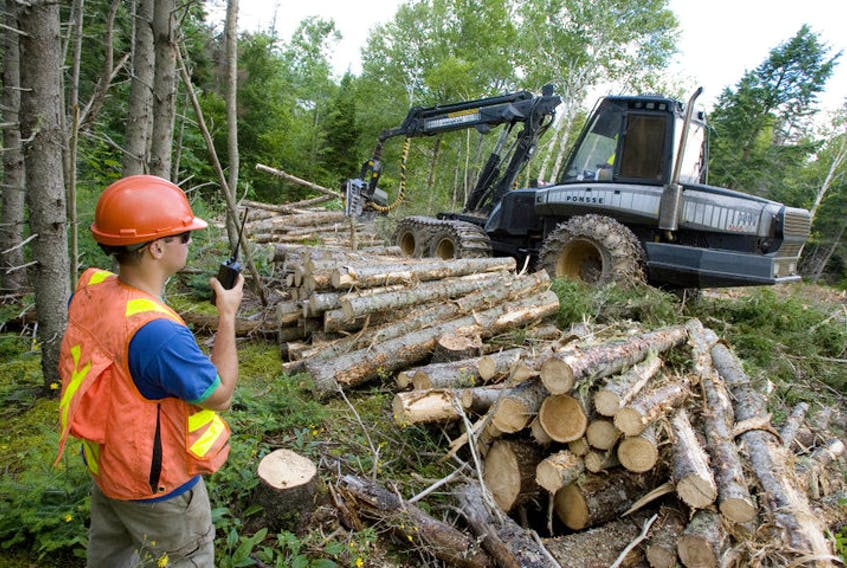 In this file photo from 2010, Brian Martinello, left, a site supervisor with Hugh MacInnis Lumber Ltd., talks with the harvester operator during a cutting job in Long Island. A year after the closure of the Northern Pulp mill in Pictou County, uncertainty abounds in the forestry sector in Cape Breton and northeastern Nova Scotia. CAPE BRETON POST