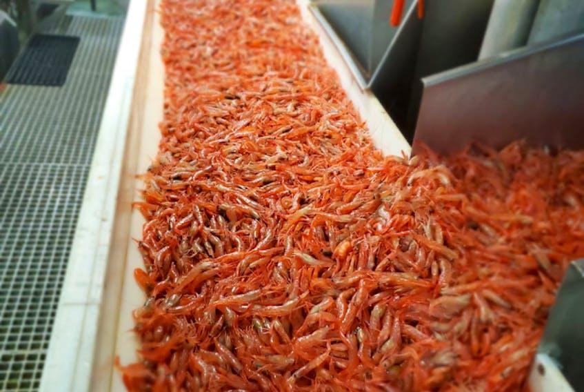 Wild-caught cold water shrimp.